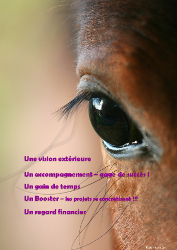 accompagnement-veterinaires